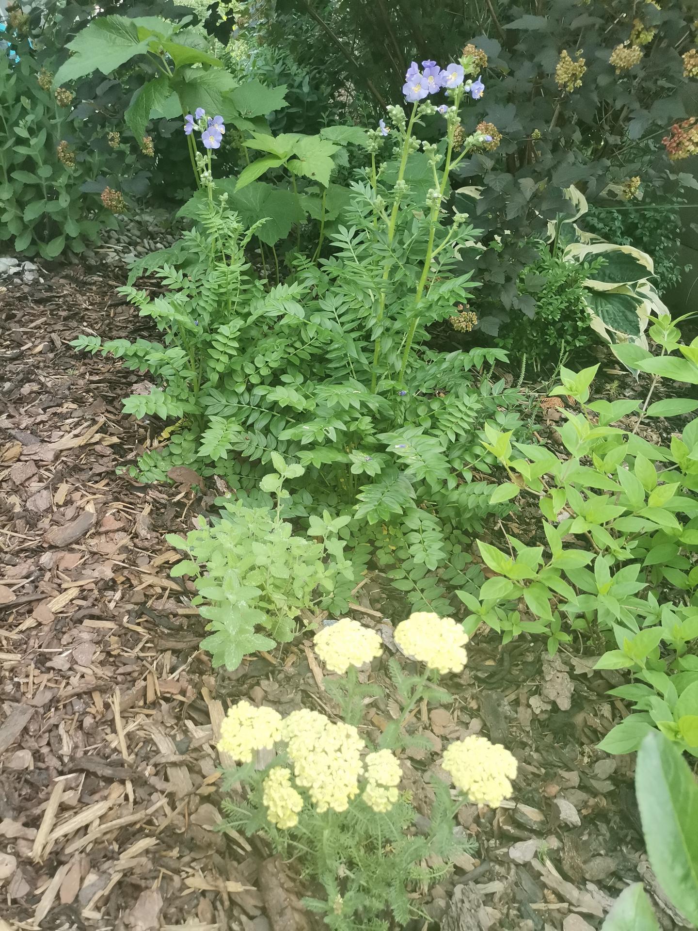 Zahrada po pěti letech - Obrázek č. 38