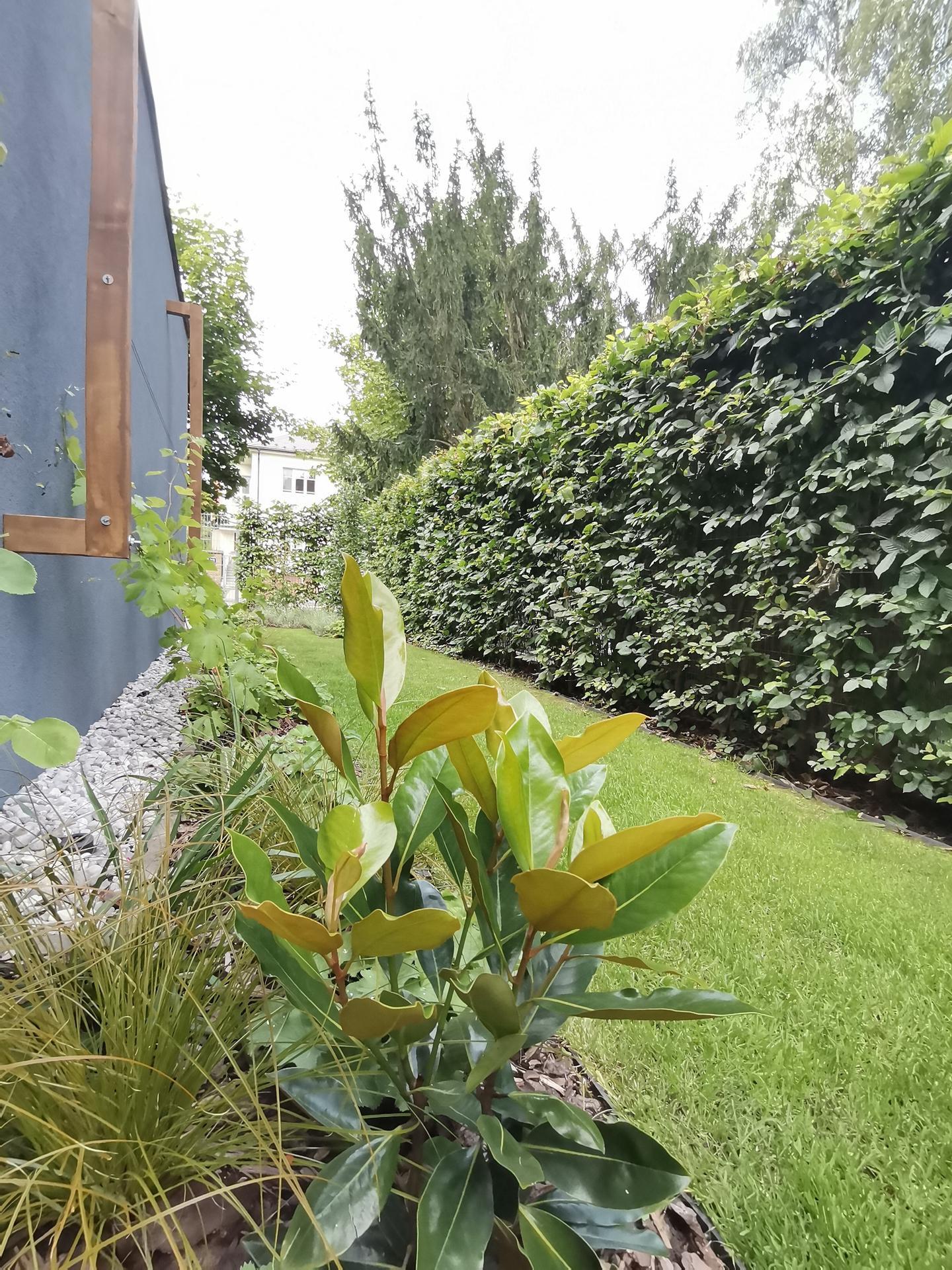 Zahrada po pěti letech - Obrázek č. 48