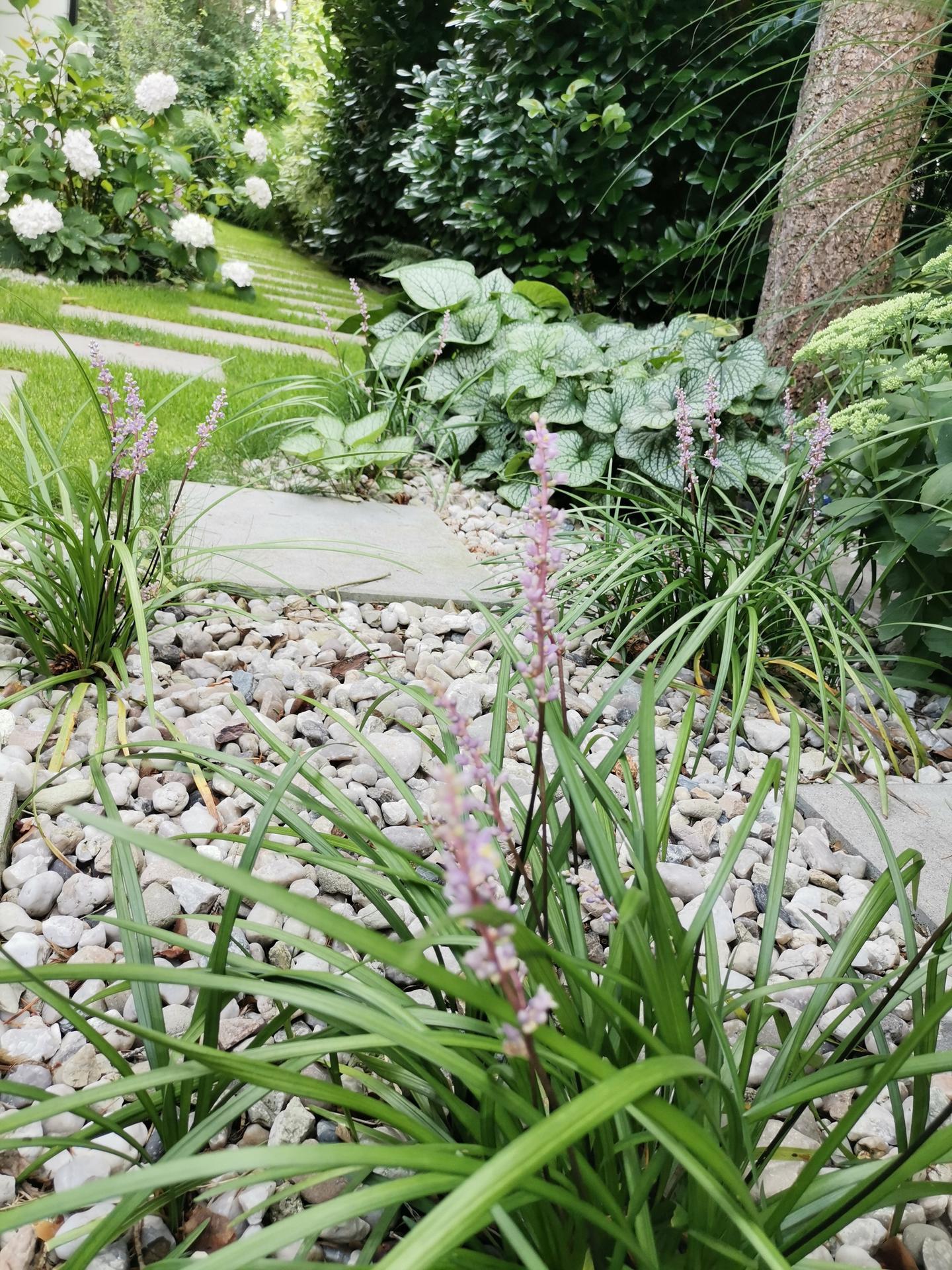 Zahrada po pěti letech - Obrázek č. 47
