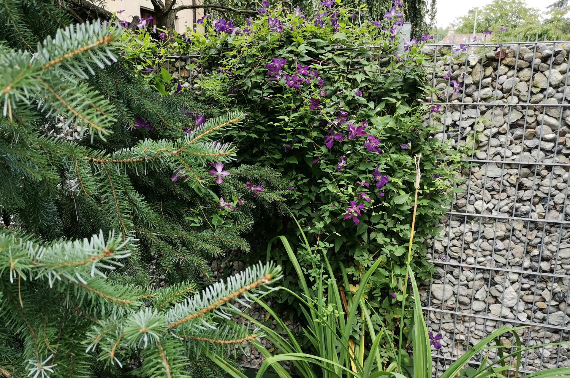 Zahrada po pěti letech - Obrázek č. 44