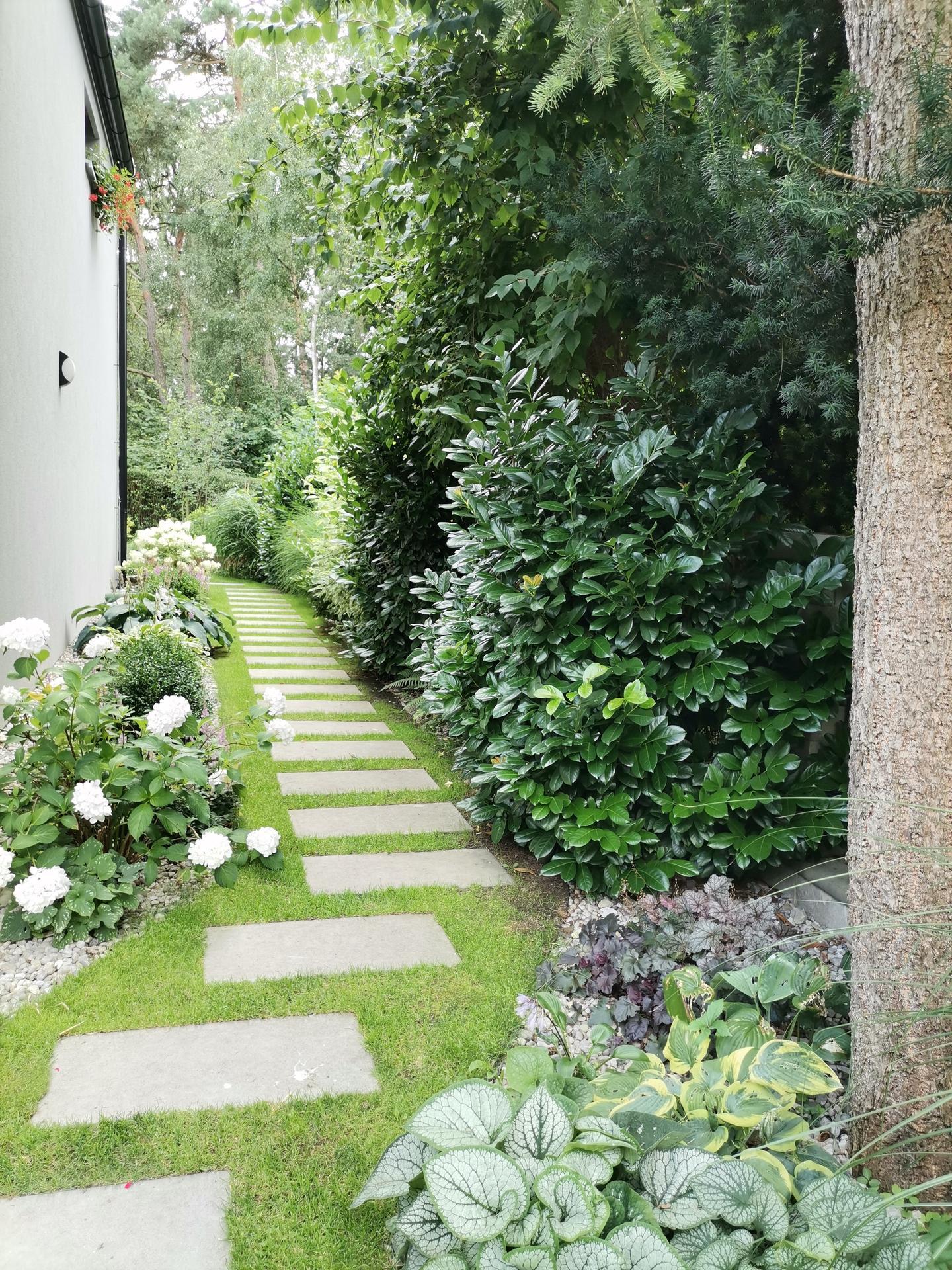 Zahrada po pěti letech - Obrázek č. 46