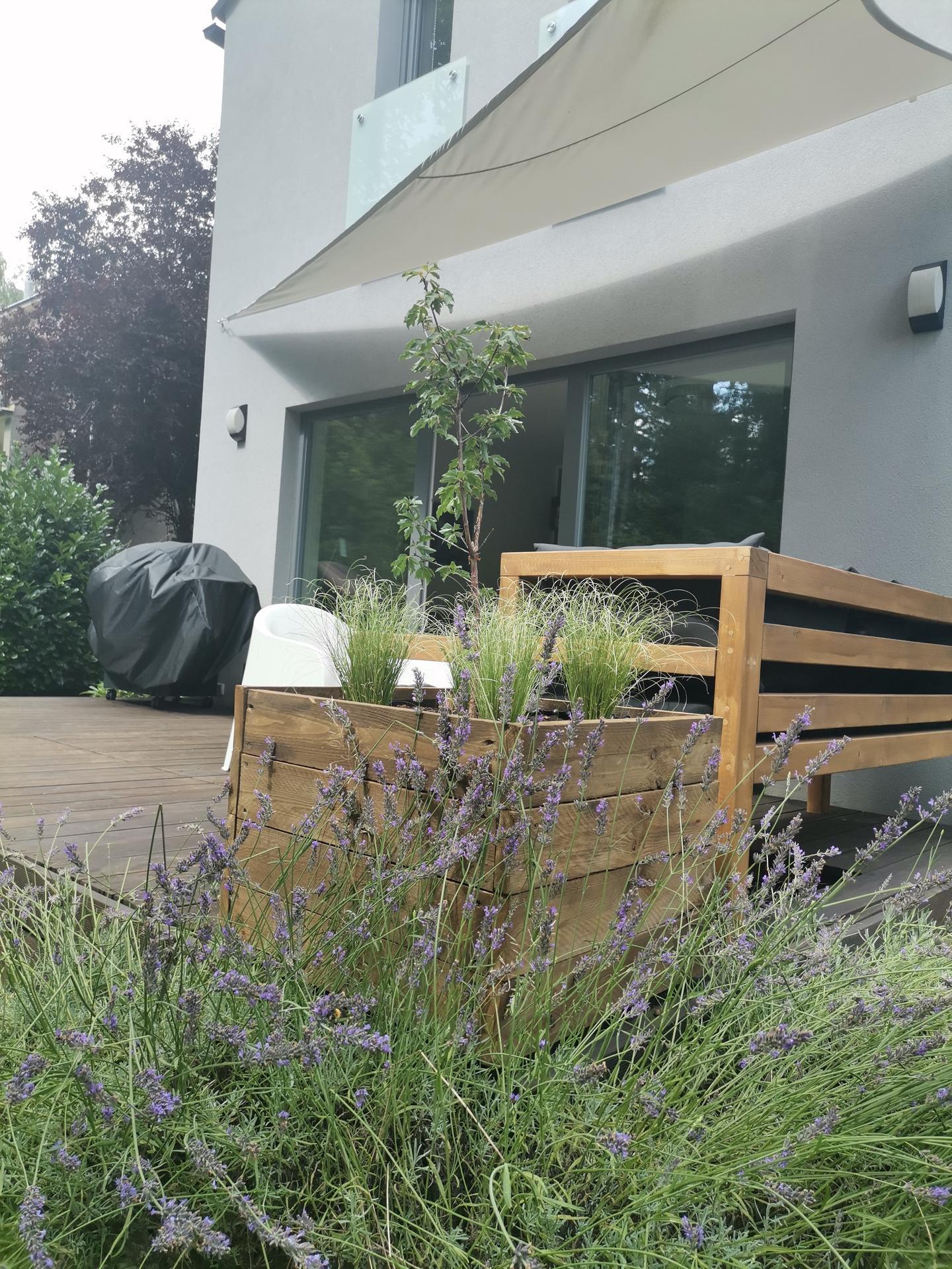 Zahrada po pěti letech - Obrázek č. 52