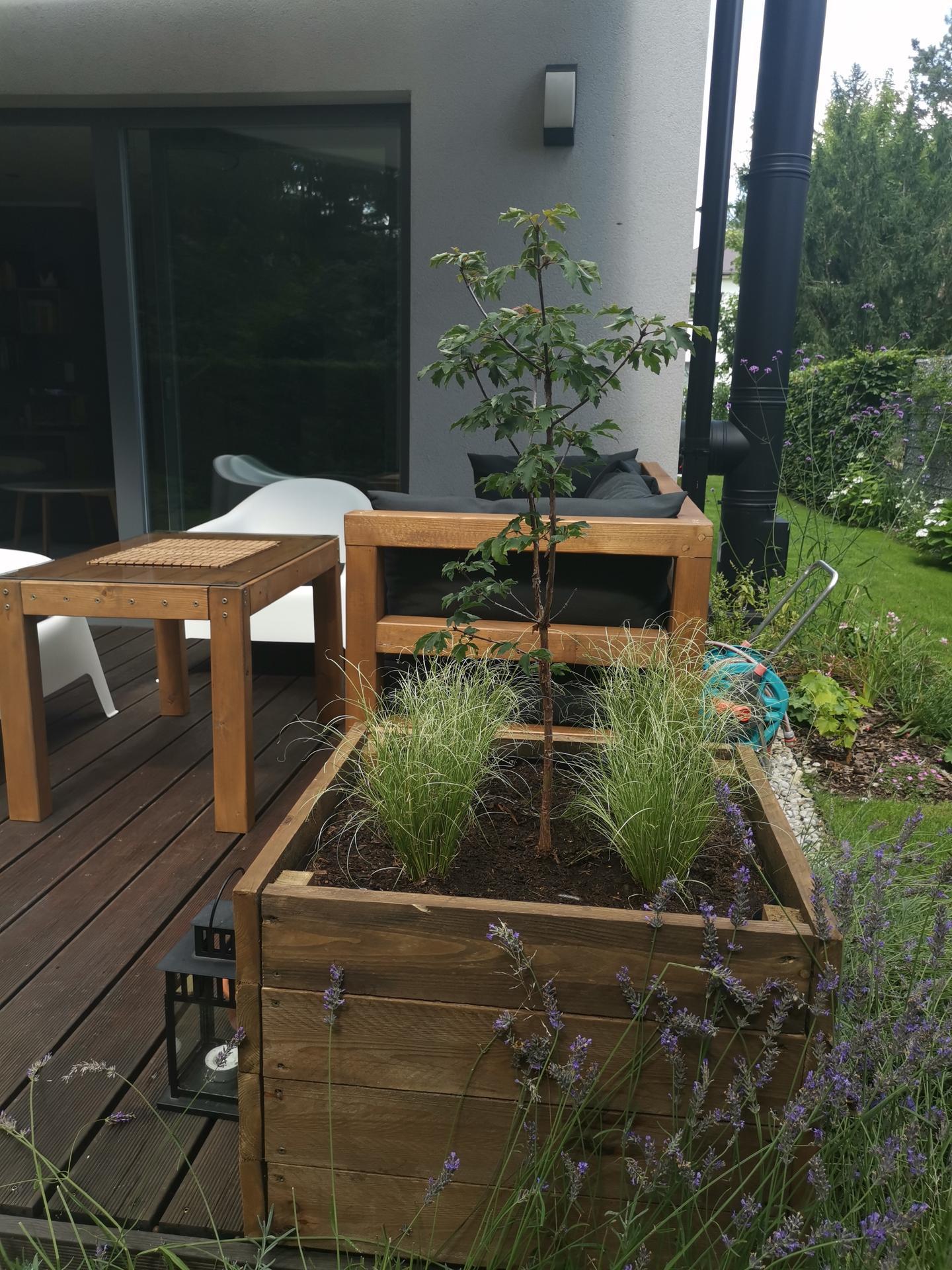 Zahrada po pěti letech - Obrázek č. 53