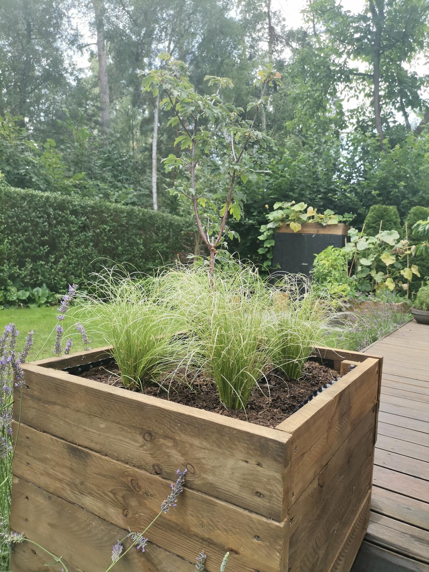 Zahrada po pěti letech - Obrázek č. 54