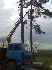 borovice padli za obeť novostavbe :(