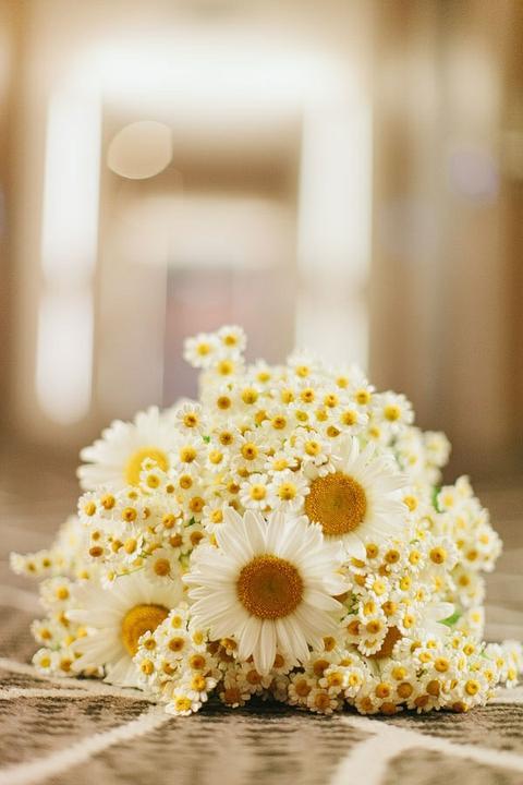 Kvety - tie male minimargaretky su roztomile