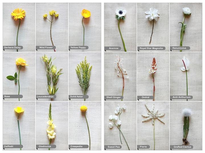 Kvety - Obrázok č. 54