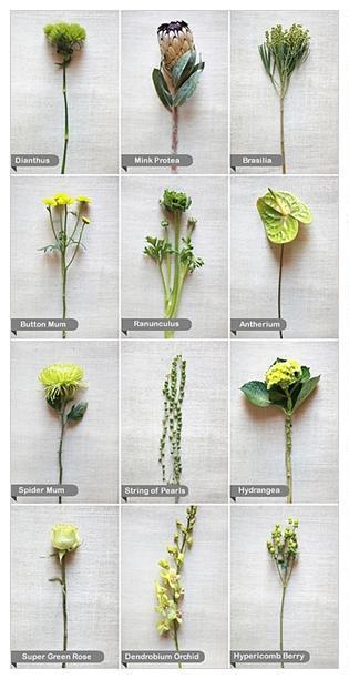 Kvety - Obrázok č. 55