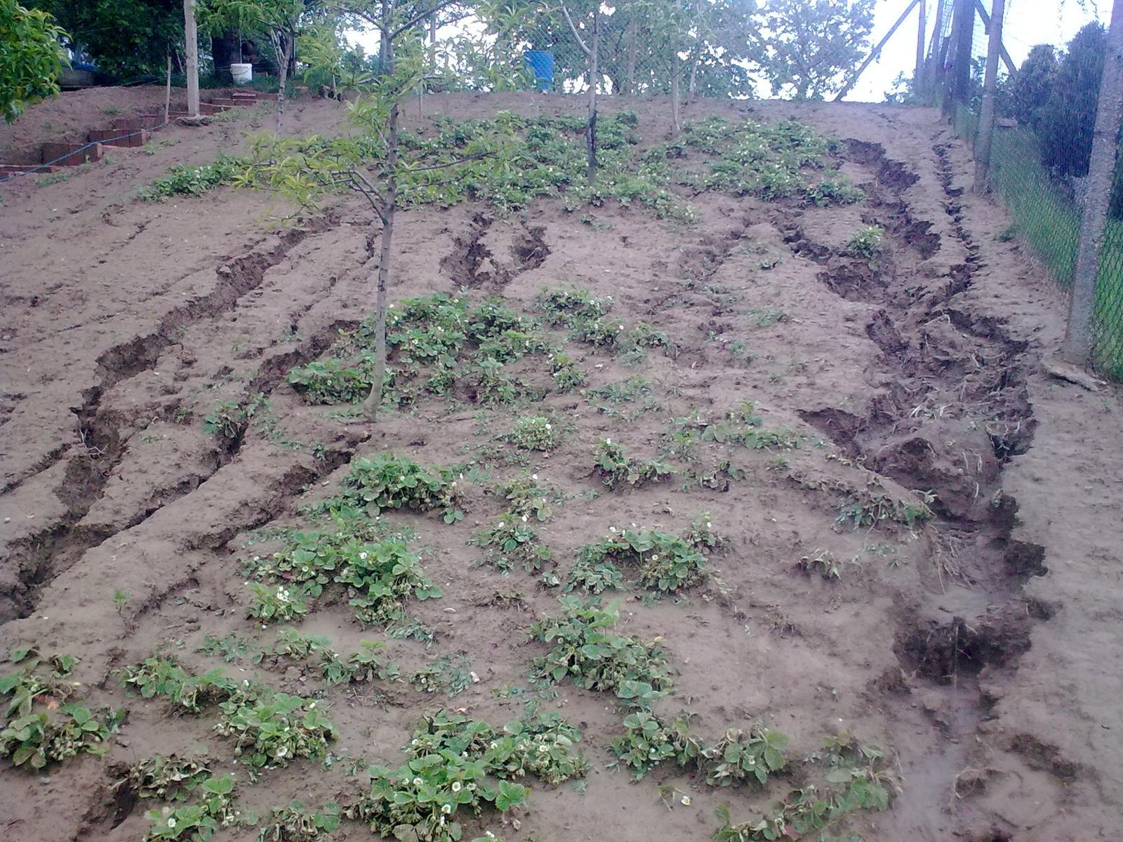"""Naša záhradka po včerajšom """"daždi"""" - Obrázok č. 3"""