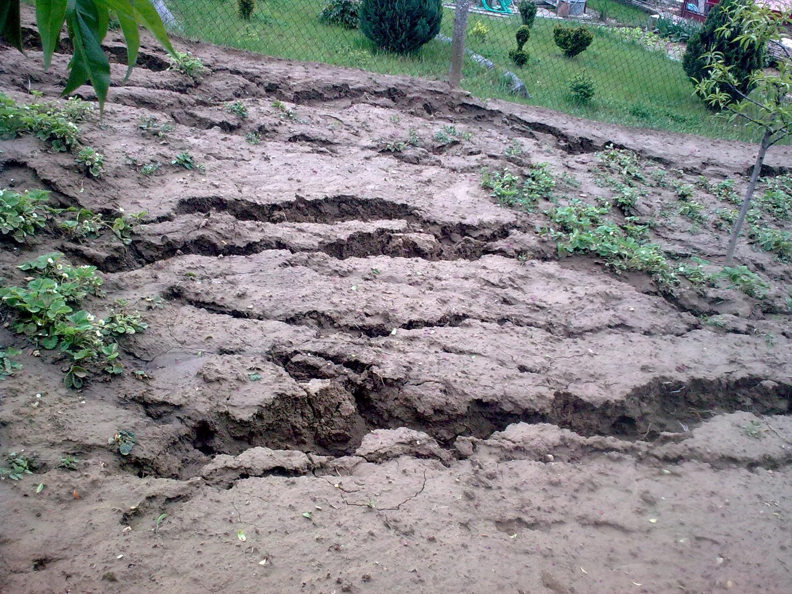 """Naša záhradka po včerajšom """"daždi"""" - Rio Grande :P"""