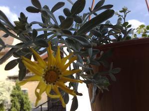 vraj by mali vydrzat priame slnko cely den - zatial drzia ;)