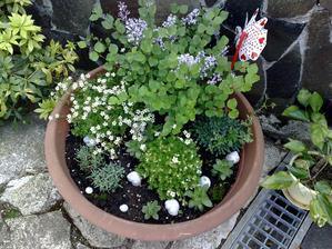 moj rozkvitnuty kvetinac