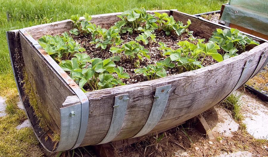 Na záhradke - inšpirácie z celého záhradného sveta. - Obrázok č. 490