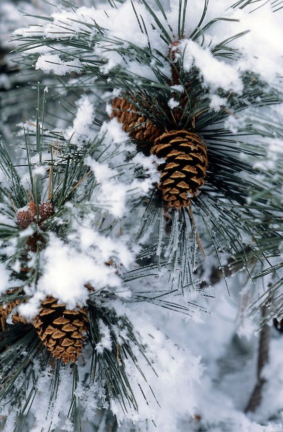 Zima je zimička :) - Obrázok č. 33