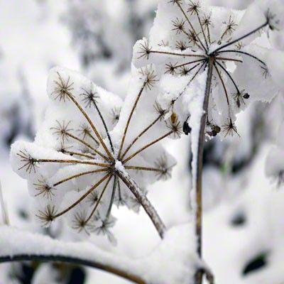 Zima je zimička :) - Obrázok č. 58
