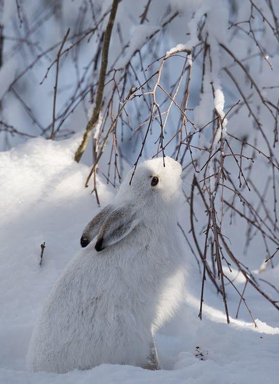 Zima je zimička :) - Obrázok č. 71