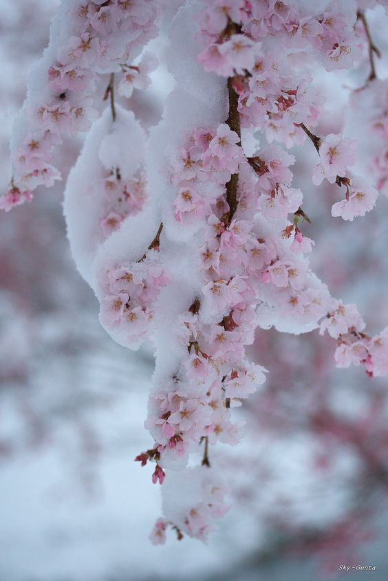 Zima je zimička :) - Obrázok č. 86