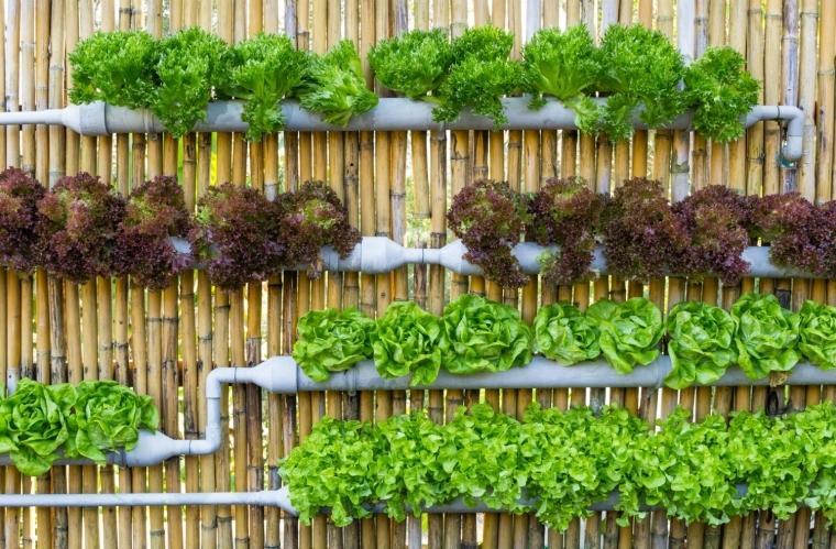 Vertikálne záhradky alebo záhony na stenách - Obrázok č. 6