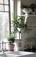 otlceny kvetinac s bylinkami na okne