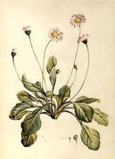 z tychto rastliniek budem vyberat na herbarovy velky plagat do kuchyne