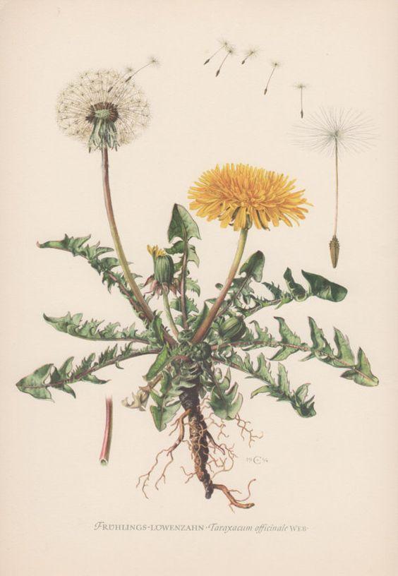 """""""Kuchyňa"""" plánovací album - z tychto rastliniek budem vyberat na herbarovy velky plagat do kuchyne"""