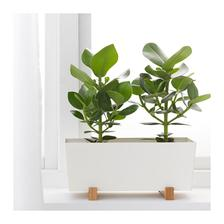 do kupelne bud na parapetu alebo na policu urcite kvetinac Ikea BITTERGURKA 8eur