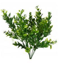 kvety buxus 0,7eur florasystem