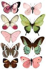 z tychto motylov budem vyberat pod kupolu