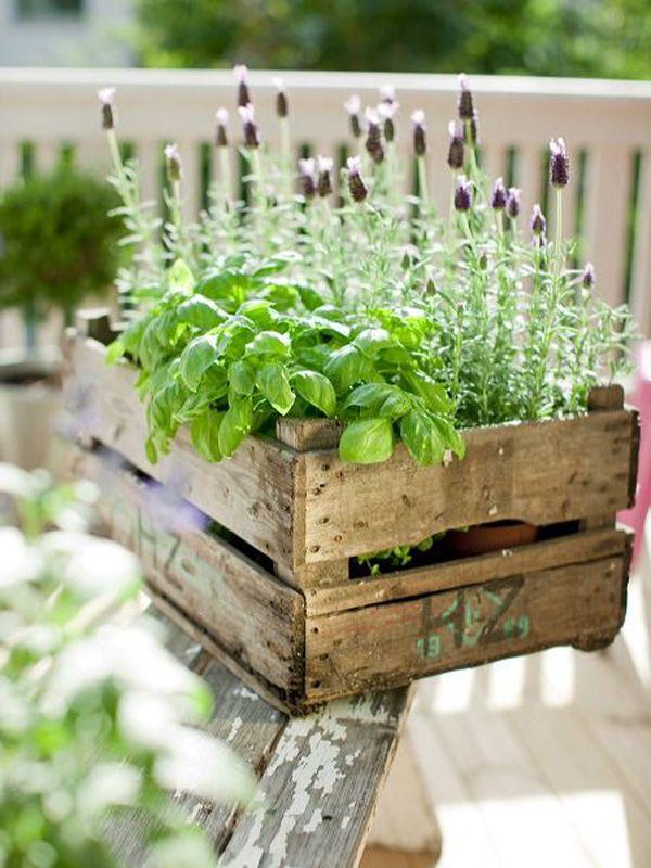 Bylinková záhrada - Obrázok č. 18