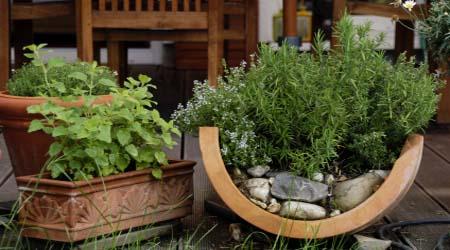 Bylinková záhrada - Obrázok č. 19