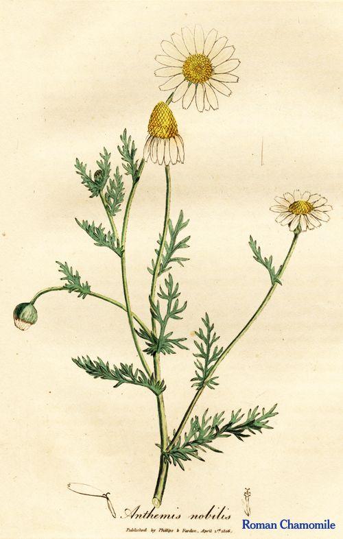 Bylinková záhrada - Obrázok č. 12