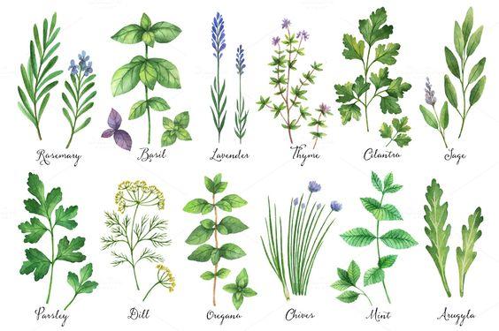 Bylinková záhrada - Obrázok č. 41