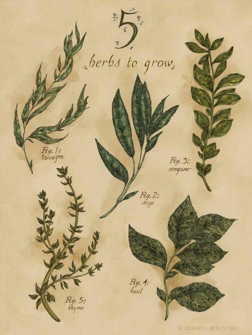 Bylinková záhrada - Obrázok č. 52