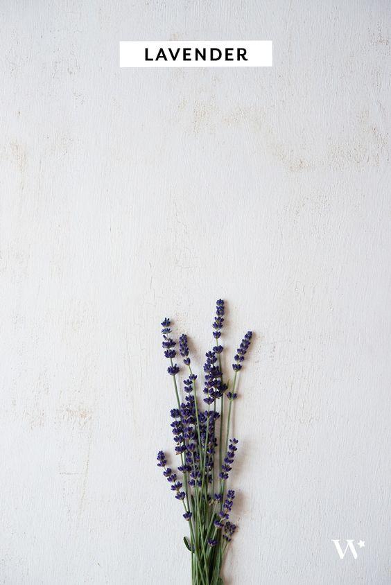 Bylinková záhrada - Obrázok č. 62