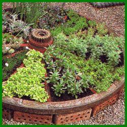 Bylinková záhrada - Obrázok č. 67