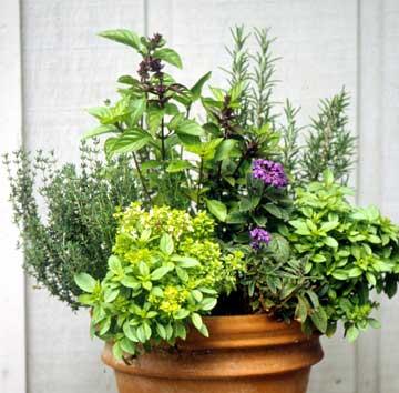 Bylinková záhrada - Obrázok č. 78
