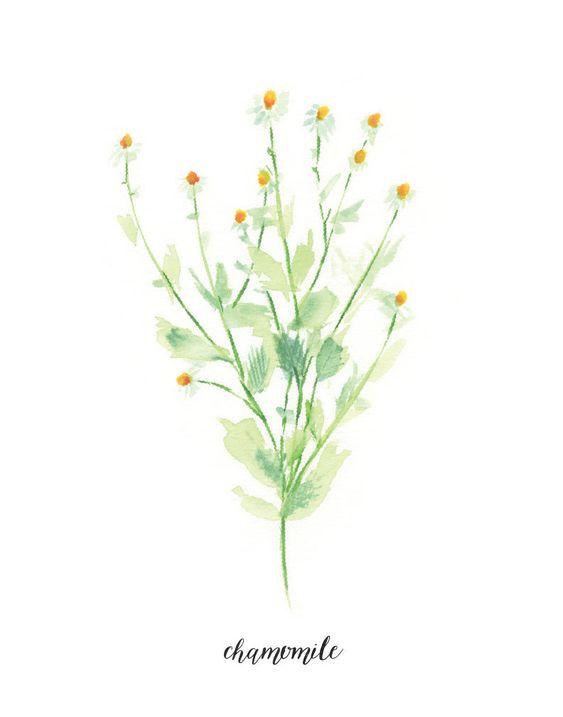 Bylinková záhrada - Obrázok č. 81