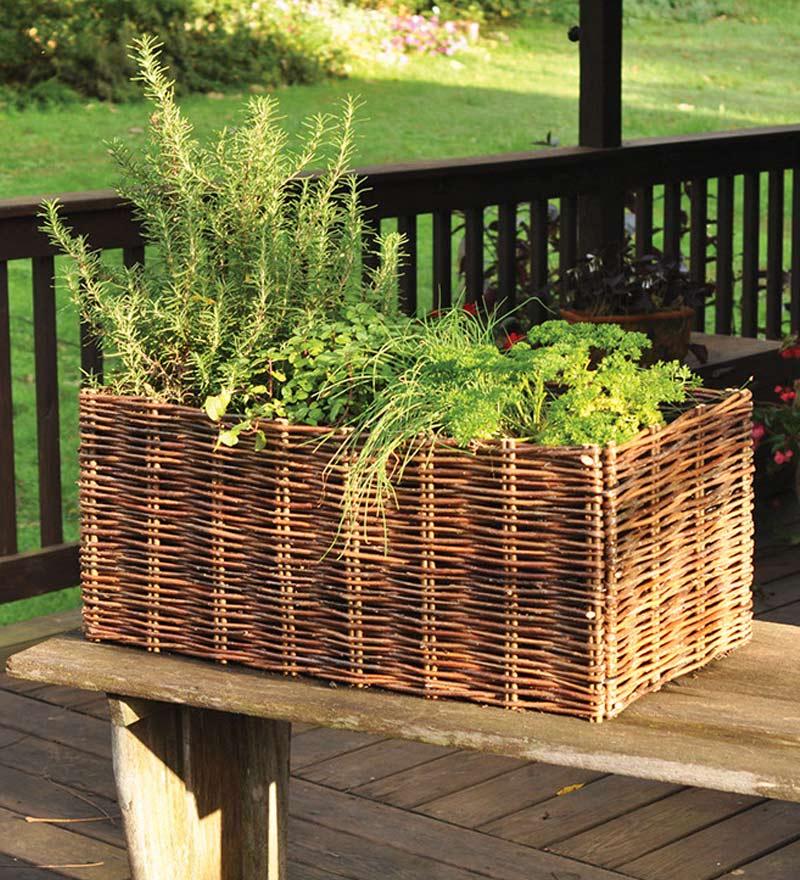 Bylinková záhrada - Obrázok č. 88