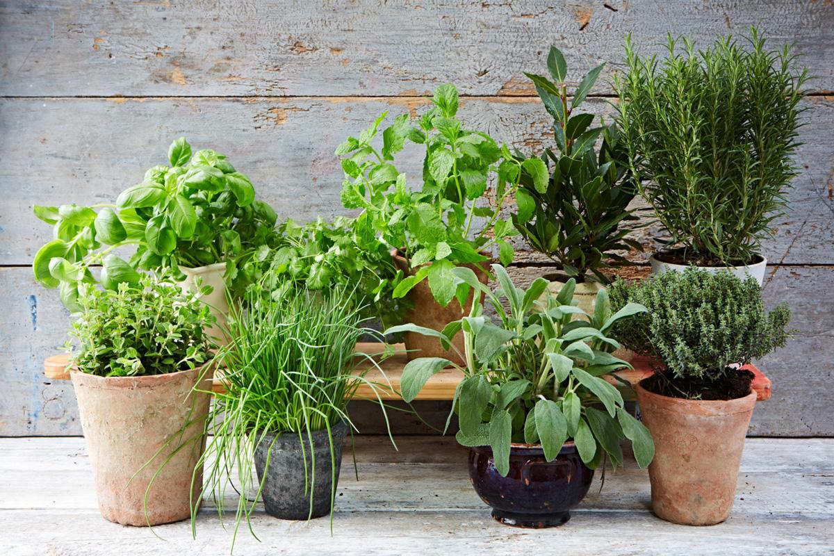 Bylinková záhrada - Obrázok č. 89