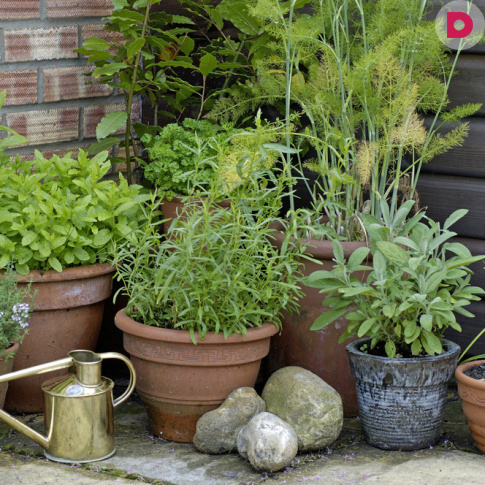 Bylinková záhrada - Obrázok č. 92