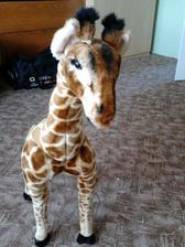 ...žirafka, která mi přinesla zásnubní...