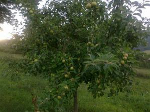 naša jablonka prvý krát zarodila a pekne len aby to ostalo