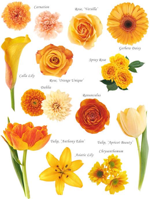 Moje oranzove predstavy - Obrázok č. 36