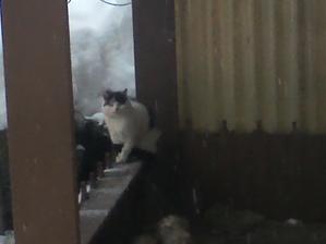 Máme novú mačičku, chodieva k nám od suseda...teším sa z nej:-)