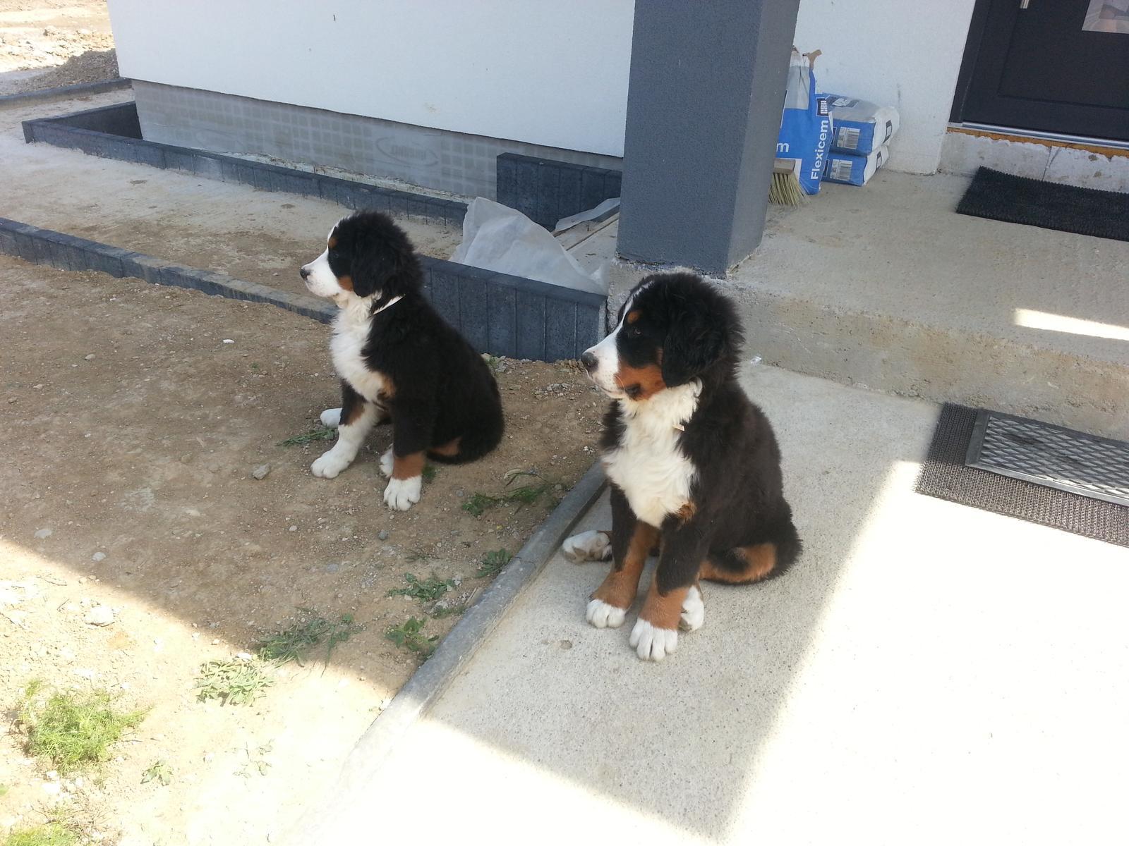 Nas zverinec - dve fenky,jeden pes a dvaja kocurikovia - dve fenky KIARA a SARA