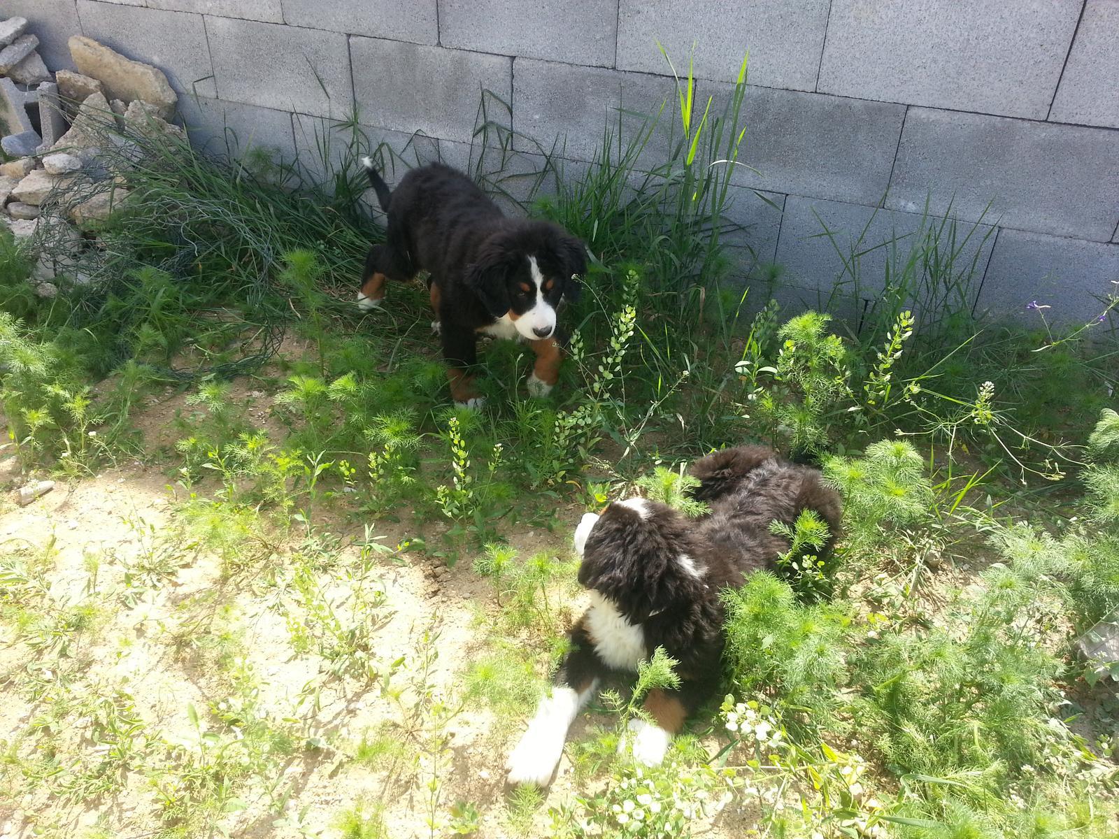 Nas zverinec - dve fenky,jeden pes a dvaja kocurikovia - Obrázok č. 5
