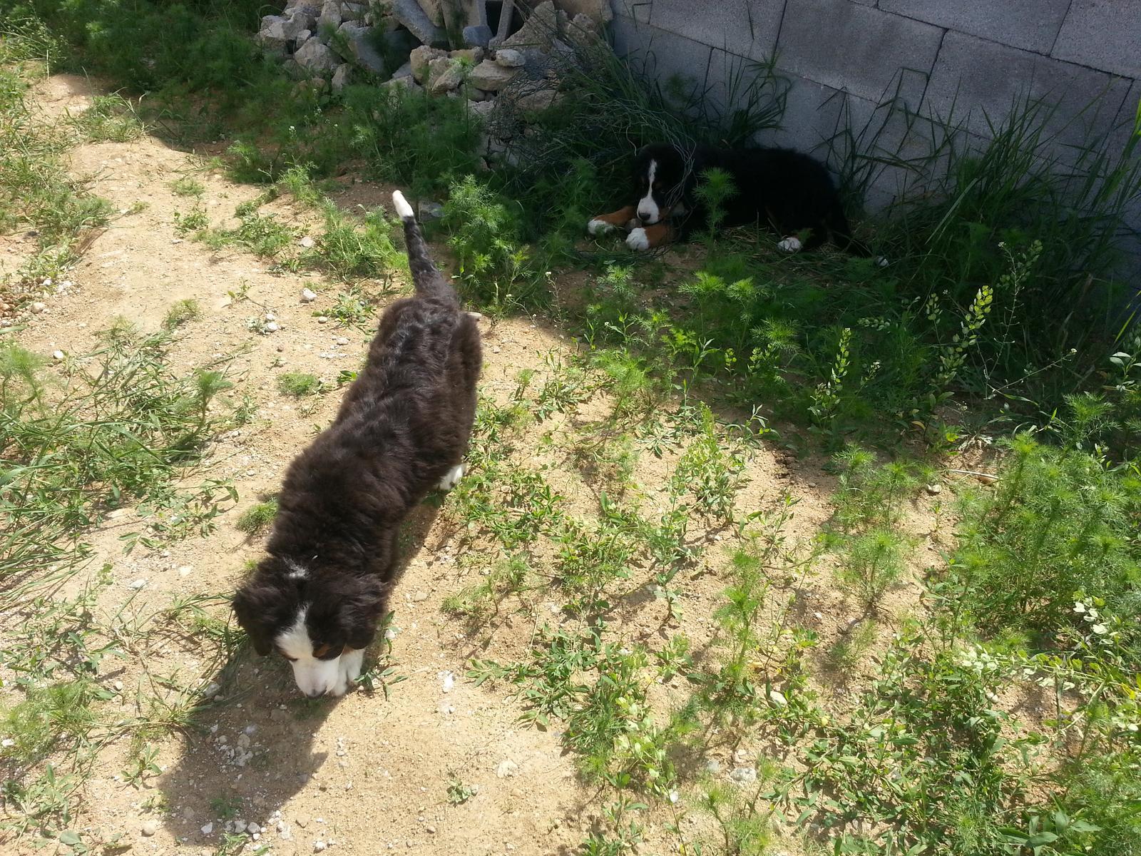 Nas zverinec - dve fenky,jeden pes a dvaja kocurikovia - Obrázok č. 6