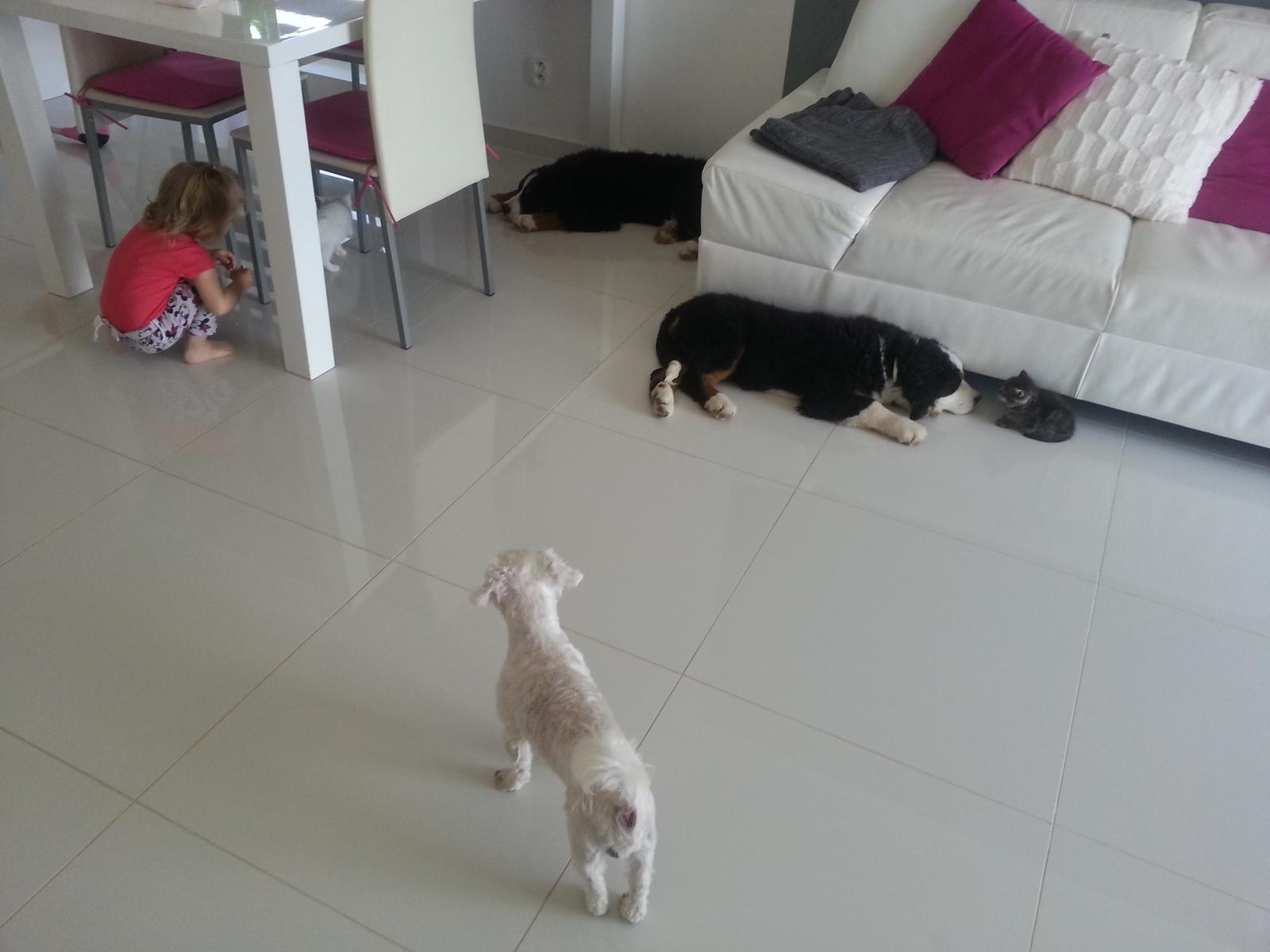 Nas zverinec - dve fenky,jeden pes a dvaja kocurikovia - maltezak pes BADY