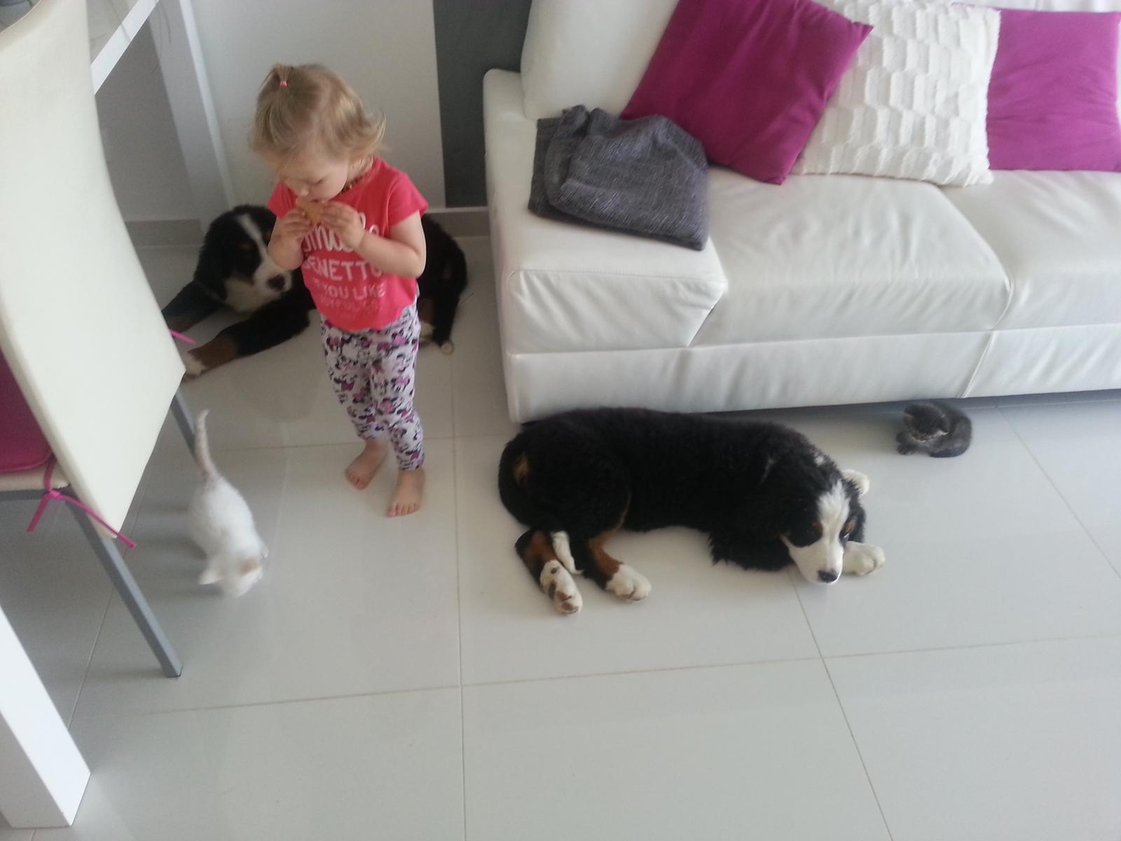 Nas zverinec - dve fenky,jeden pes a dvaja kocurikovia - Obrázok č. 8