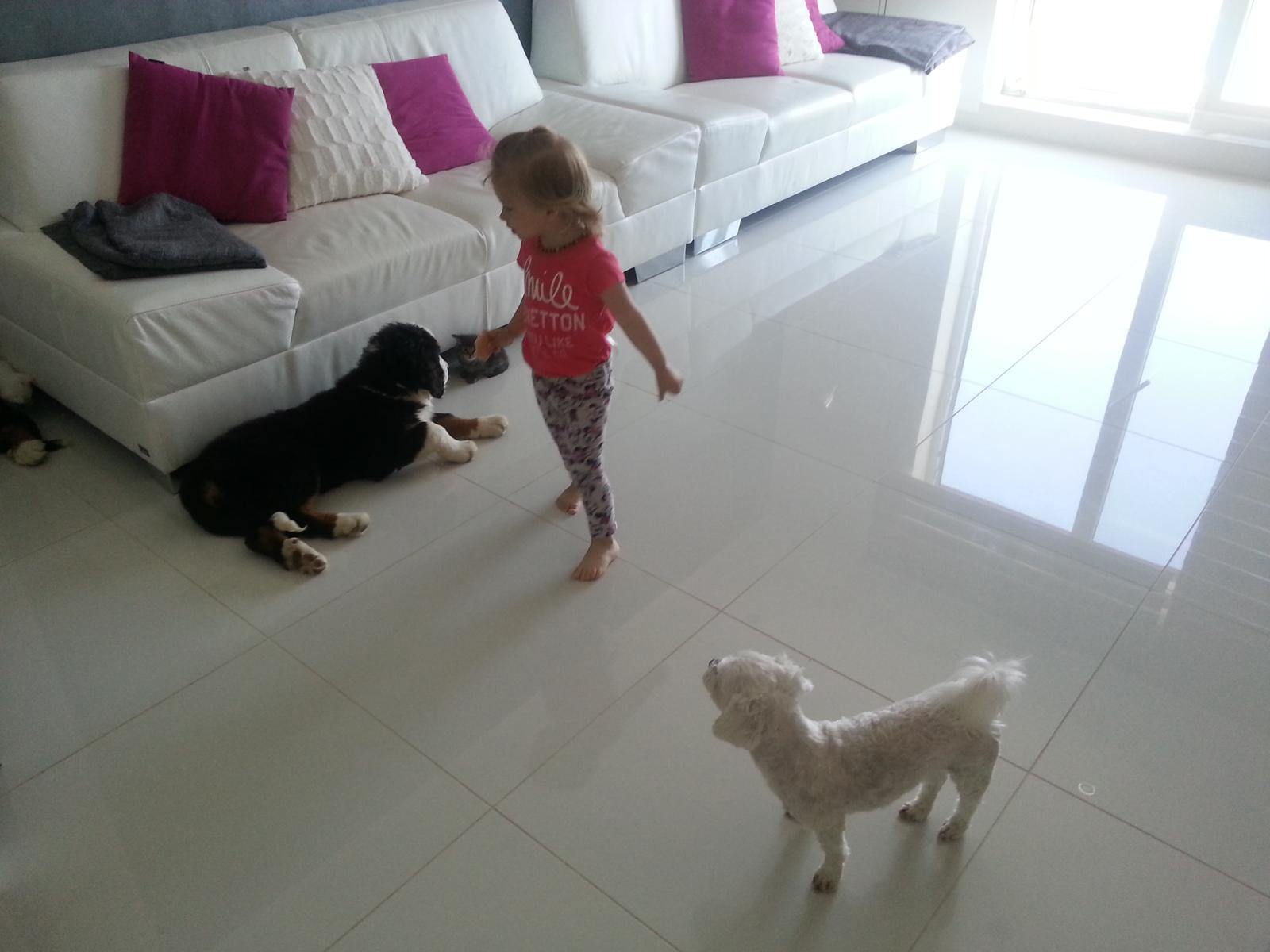 Nas zverinec - dve fenky,jeden pes a dvaja kocurikovia - Obrázok č. 9